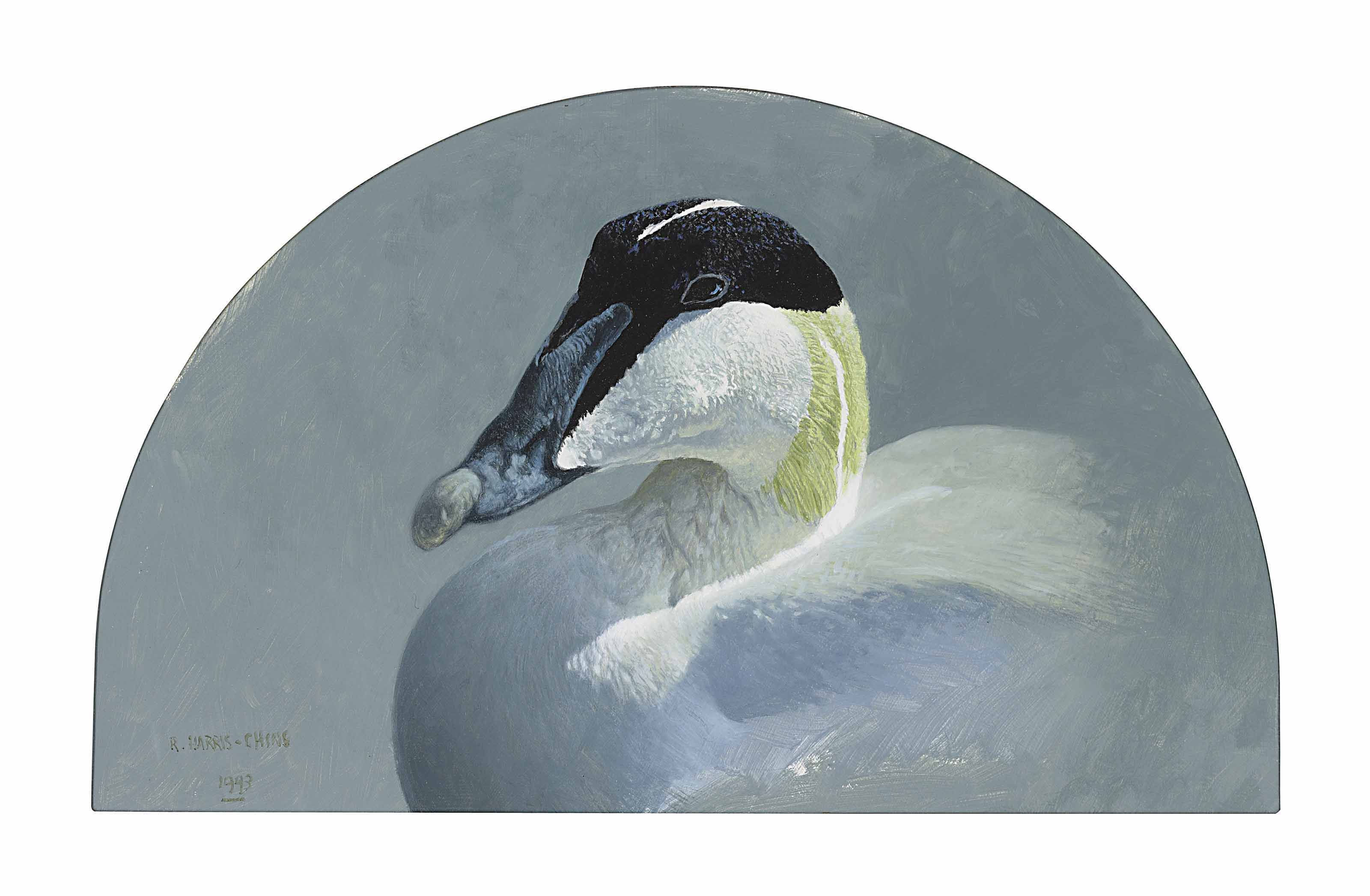 Study of the head of an eider drake