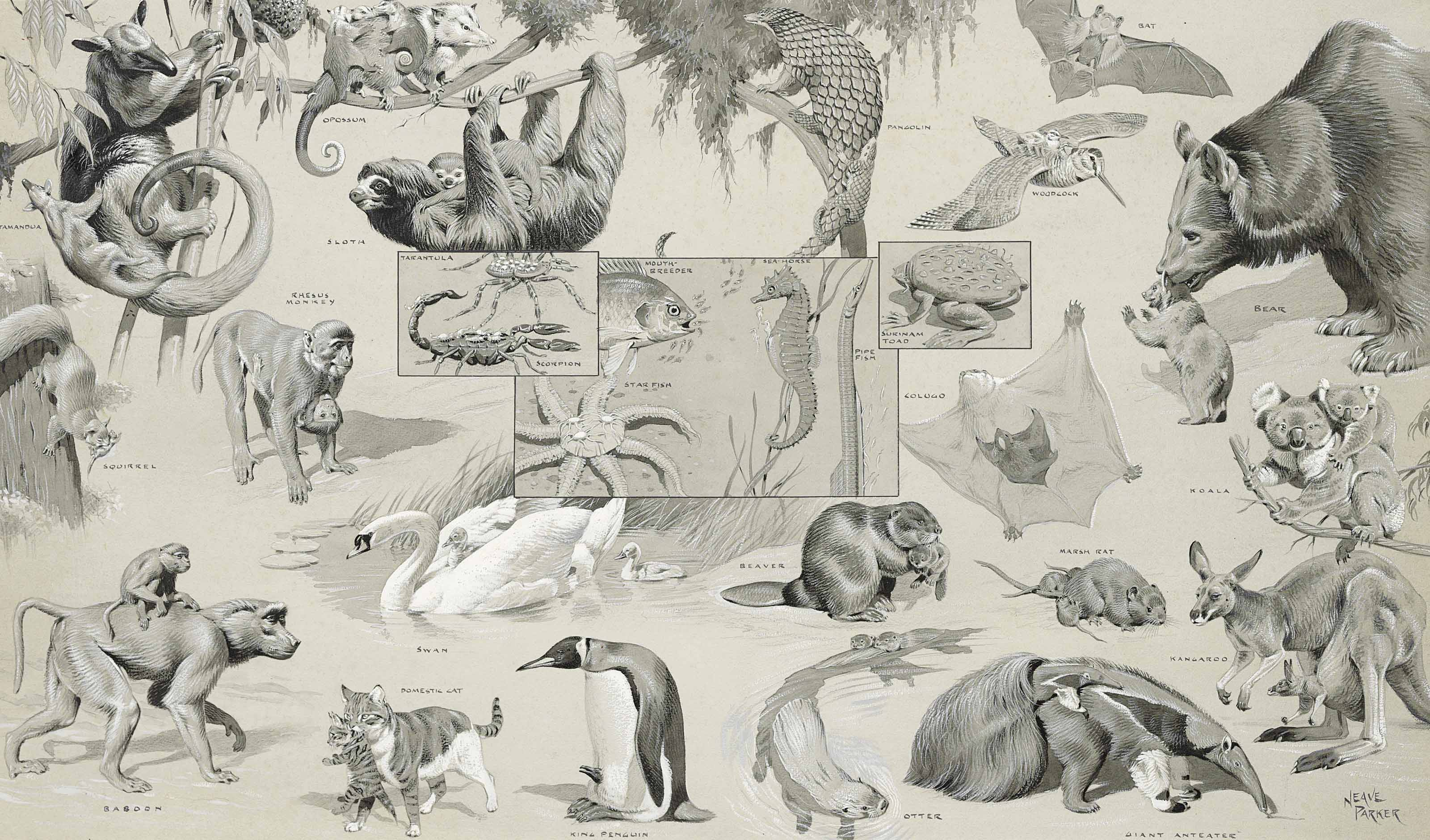 Three illustrations of animals and their young and animal groups