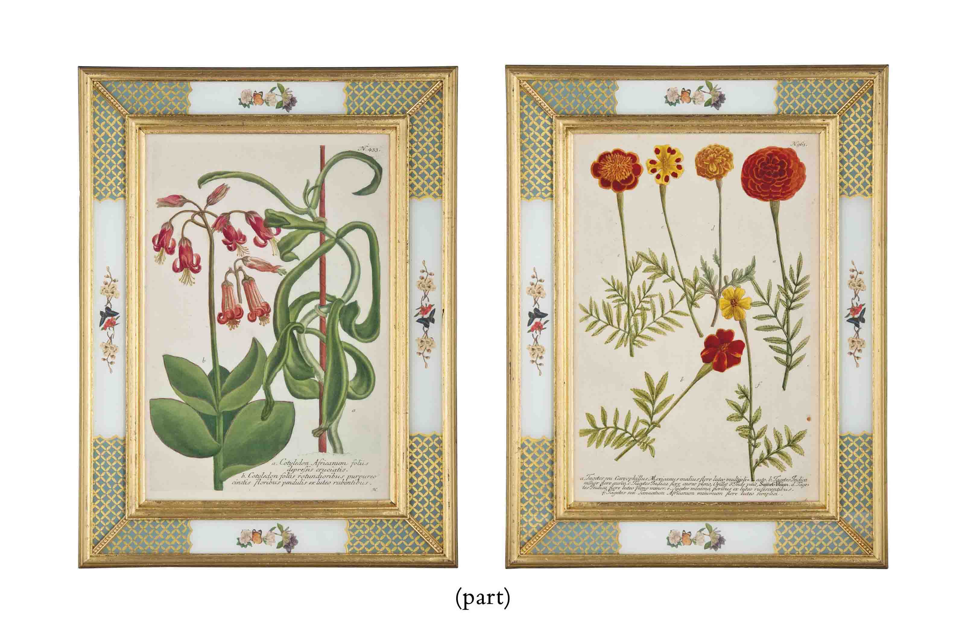 NINE HAND-COLOURED BOTANICAL ETCHINGS FROM PHYTANTHOZA ICONOGRAPHIA