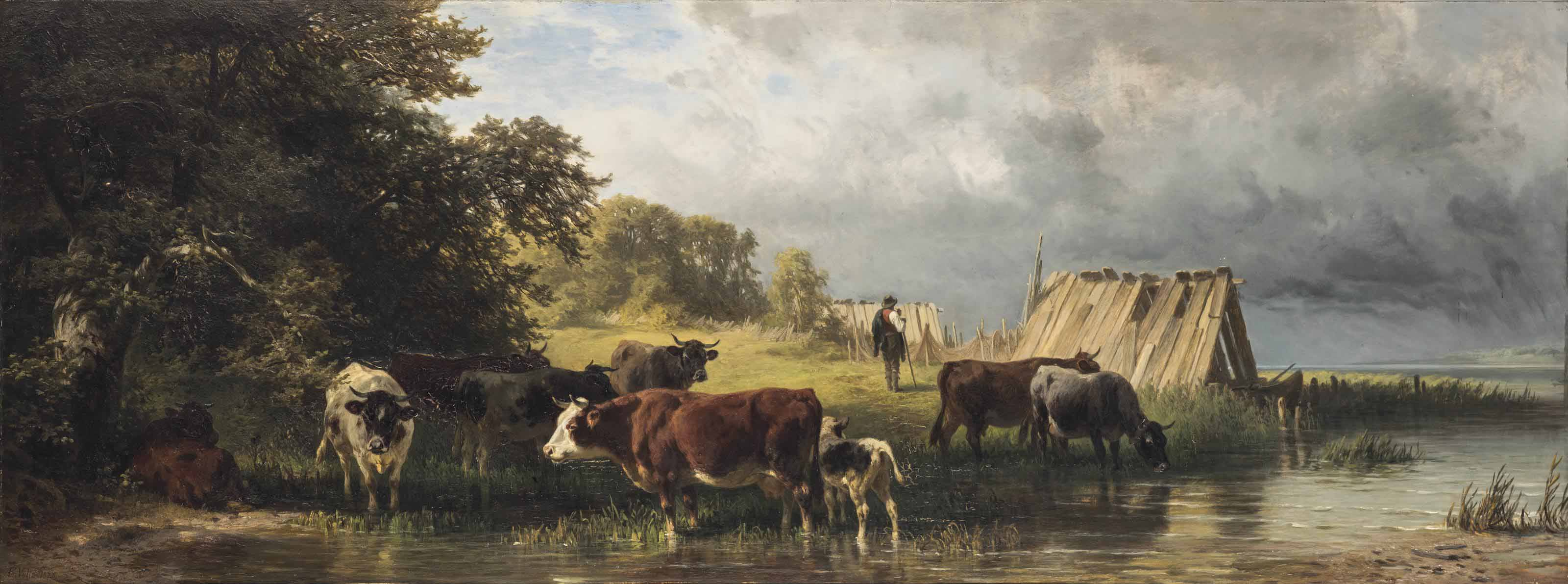 Cattle drinking from the river
