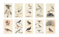 Studies of European birds: Eagle owl, Long-eared owl, and Scops owl; Little egret, Common crane, and Spoonbill; Squacco heron and White stork; Curlew and Sacred ibis; Turkey cock (domesticated) and Wild turkey; Male blackbird, Brown thrasher, and Flycatcher; Young megapode and Brush turkey; Wren, Nightingale, and Goldcrest; and Peacock and Male Capercaillie