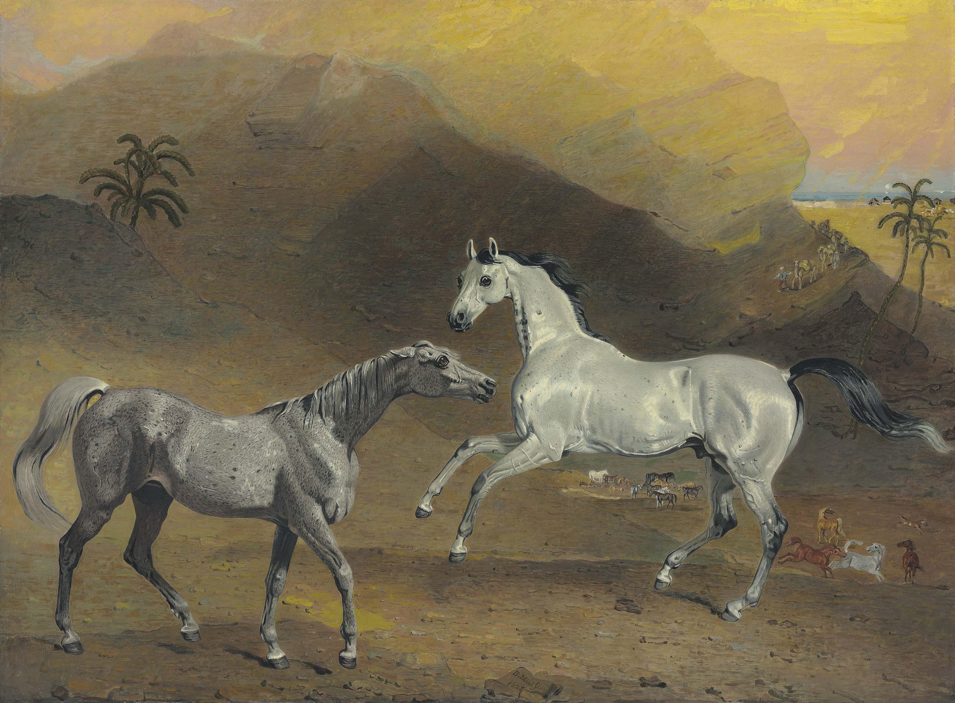 The Malcolm Arabian