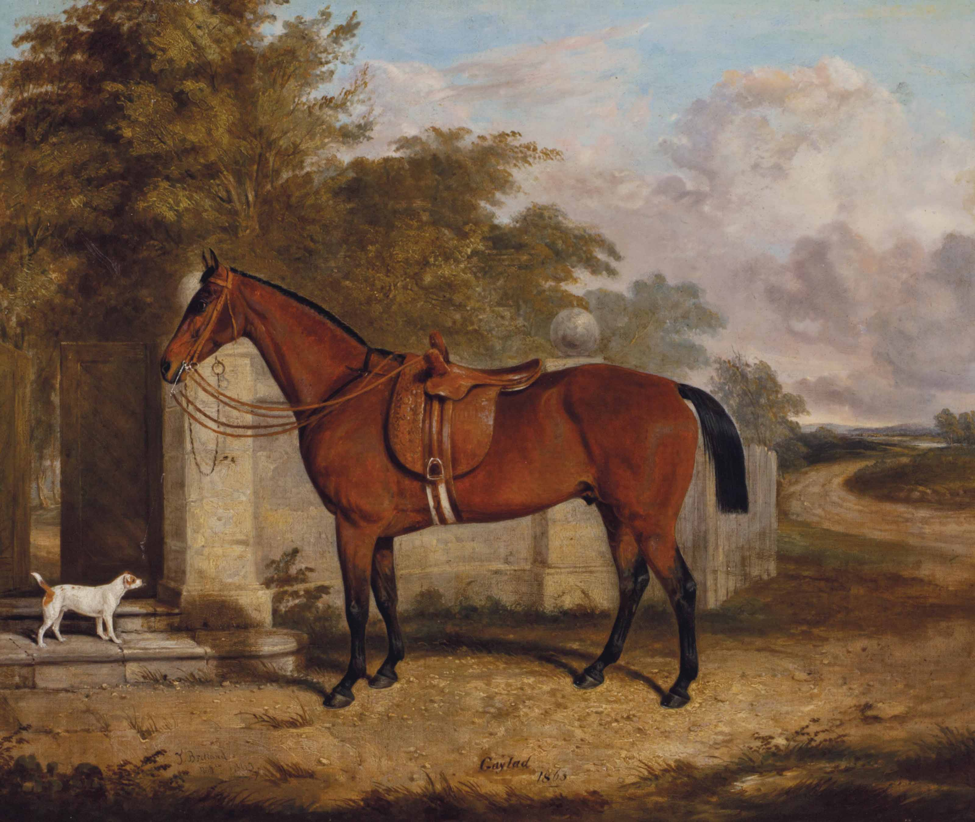 The horse Gaylad with a dog in a landscape
