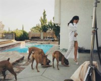 Boxer Dogs, Mission Hills, from The Valley, 1999