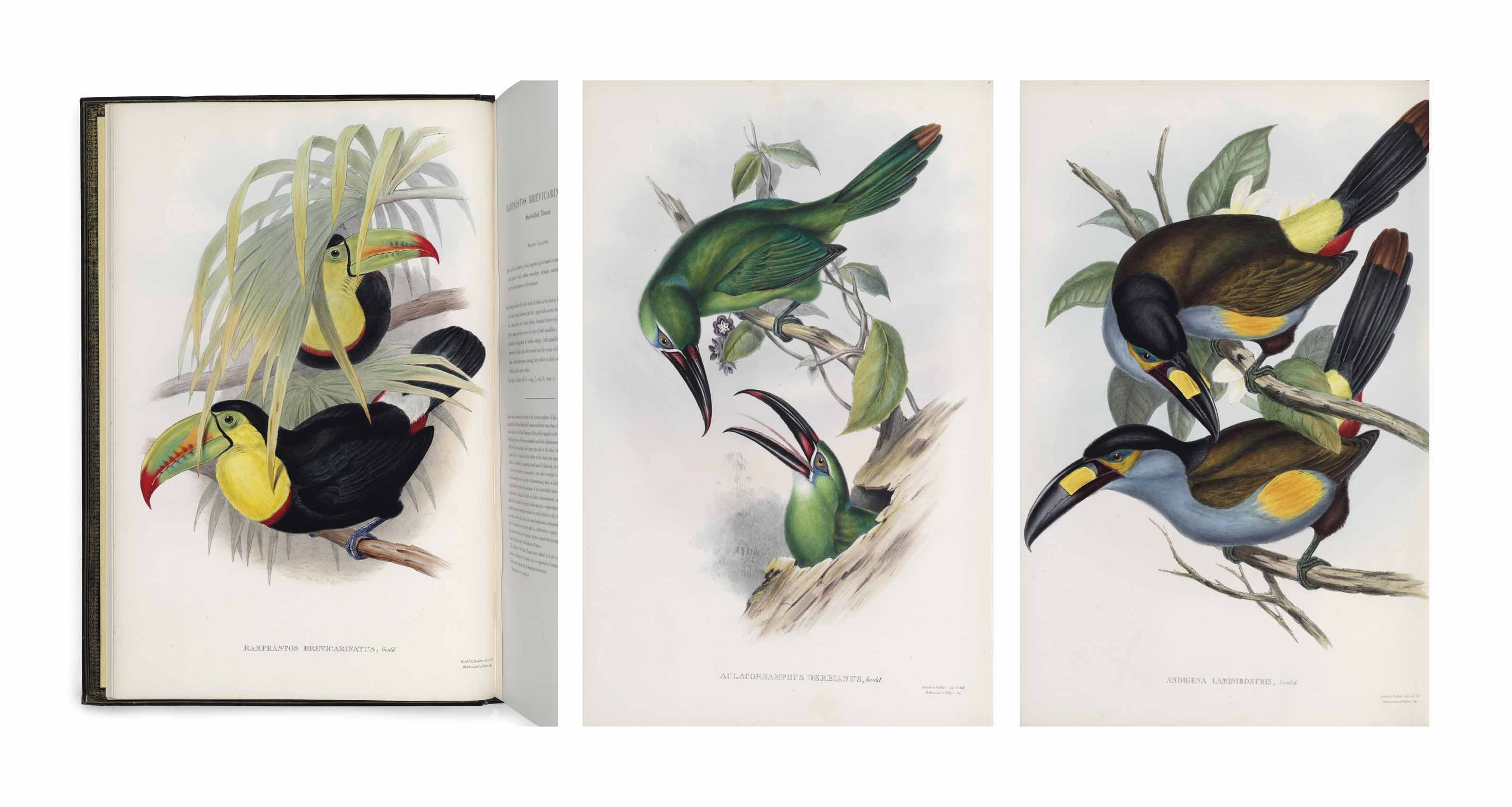 GOULD, John A Monograph of the Ramphastidae, or Family of To...
