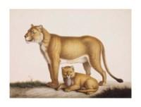 Une lionne d'Afrique et son lionceau
