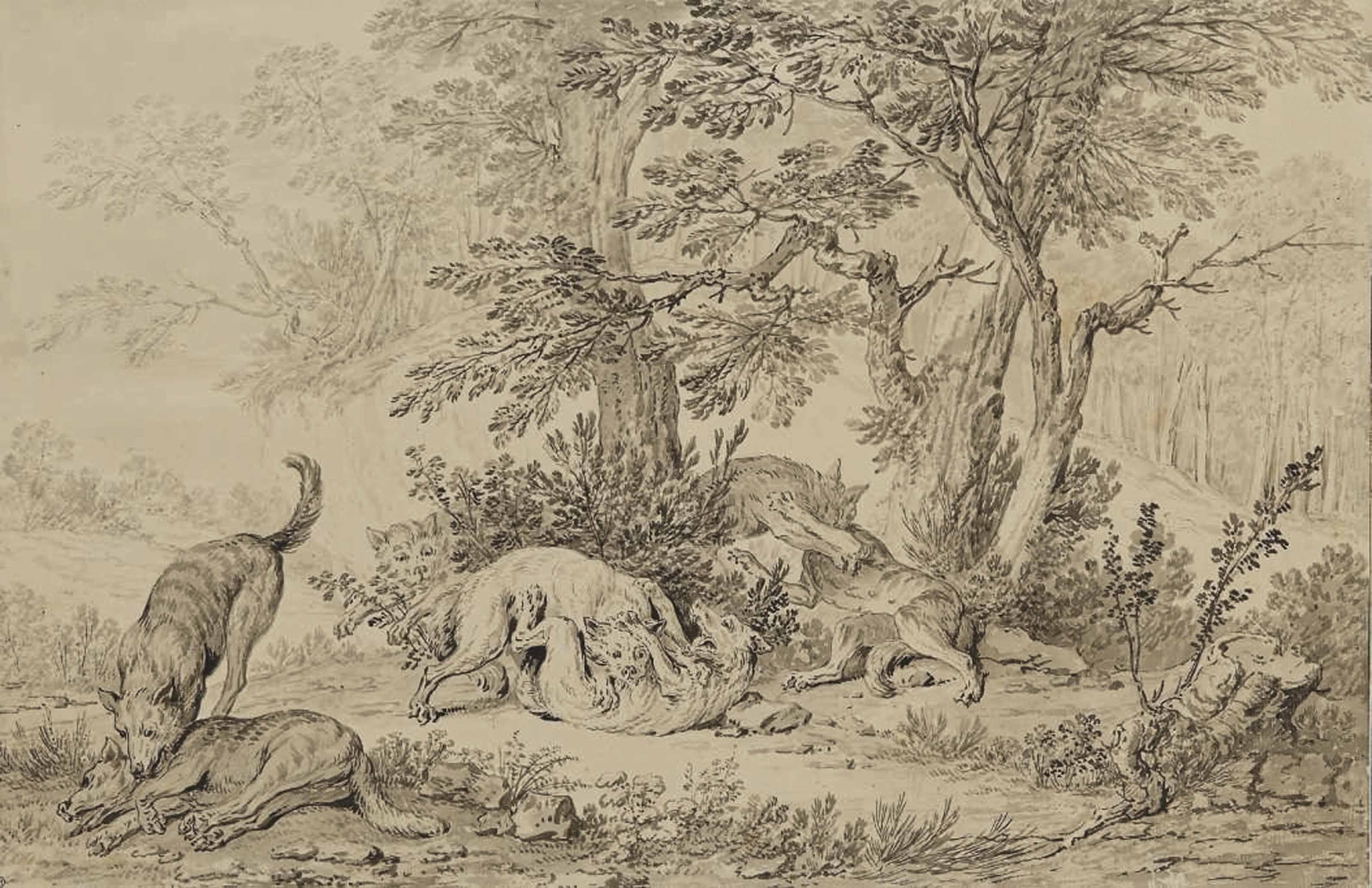 Combat de loups aux abords d'une forêt