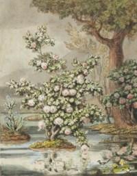 Arbuste en fleurs dans un paysage arboré