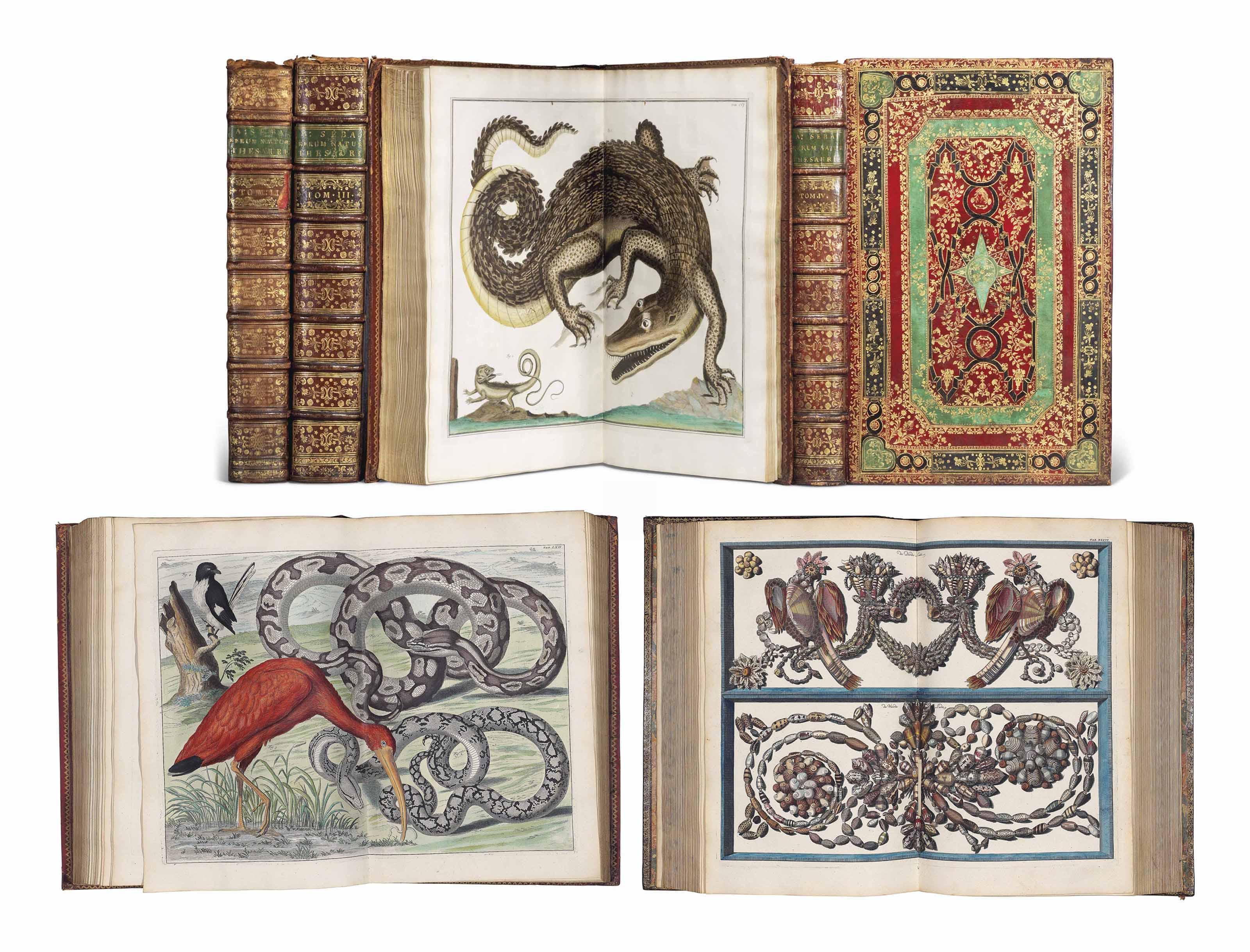 SEBA, Albertus. Locupletissimi rerum naturalium thesauri. Amsterdam: J. Wetsten, W. Smith, J. Waesberg, H.C. Arksteum, H. Merkum et P. Schouten, 1734-1735-1758 [-1760] -1765 [-1769].