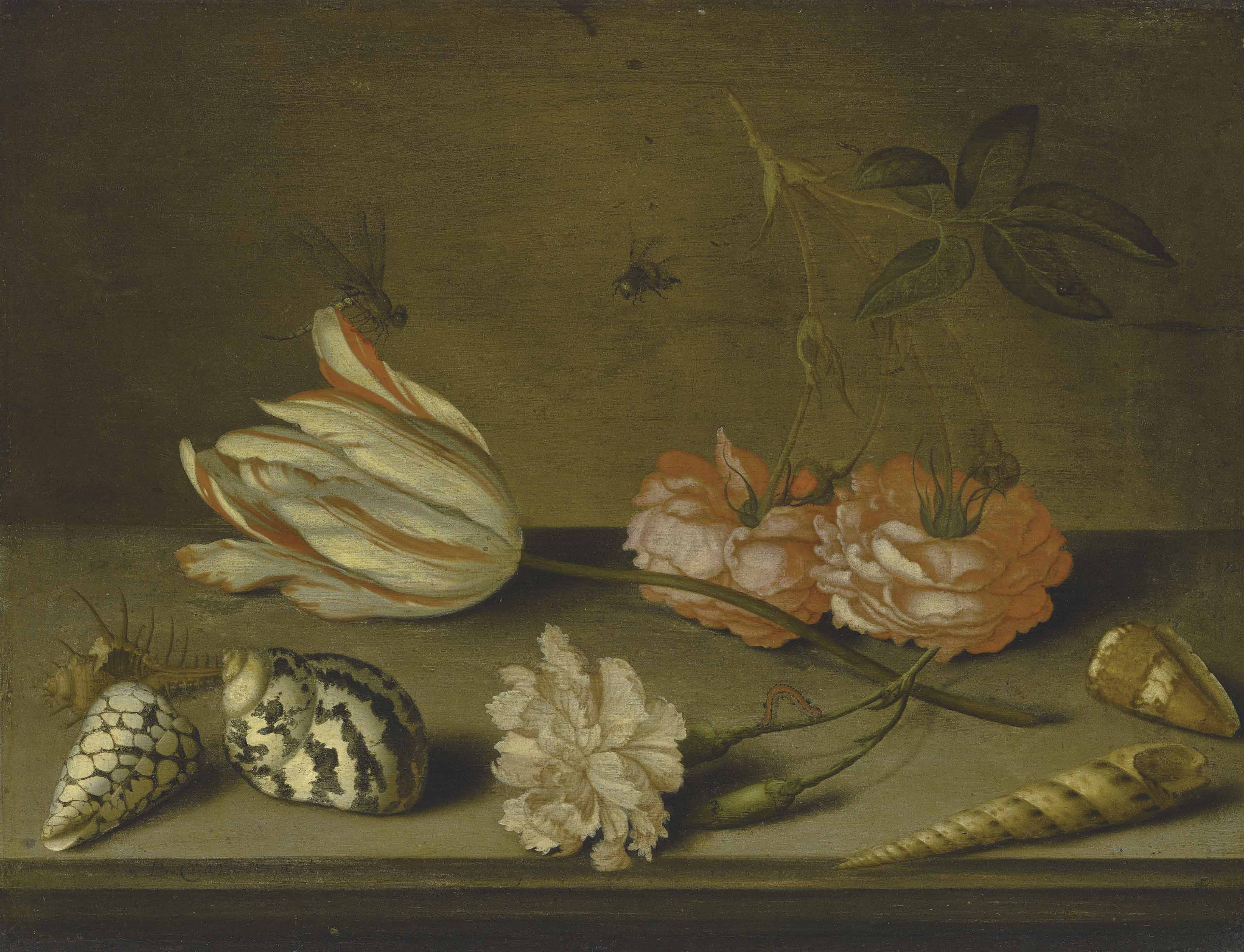 A Semper Augustus tulip, a carnation and roses, with shells and insects, on a ledge