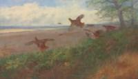 Partridges in flight