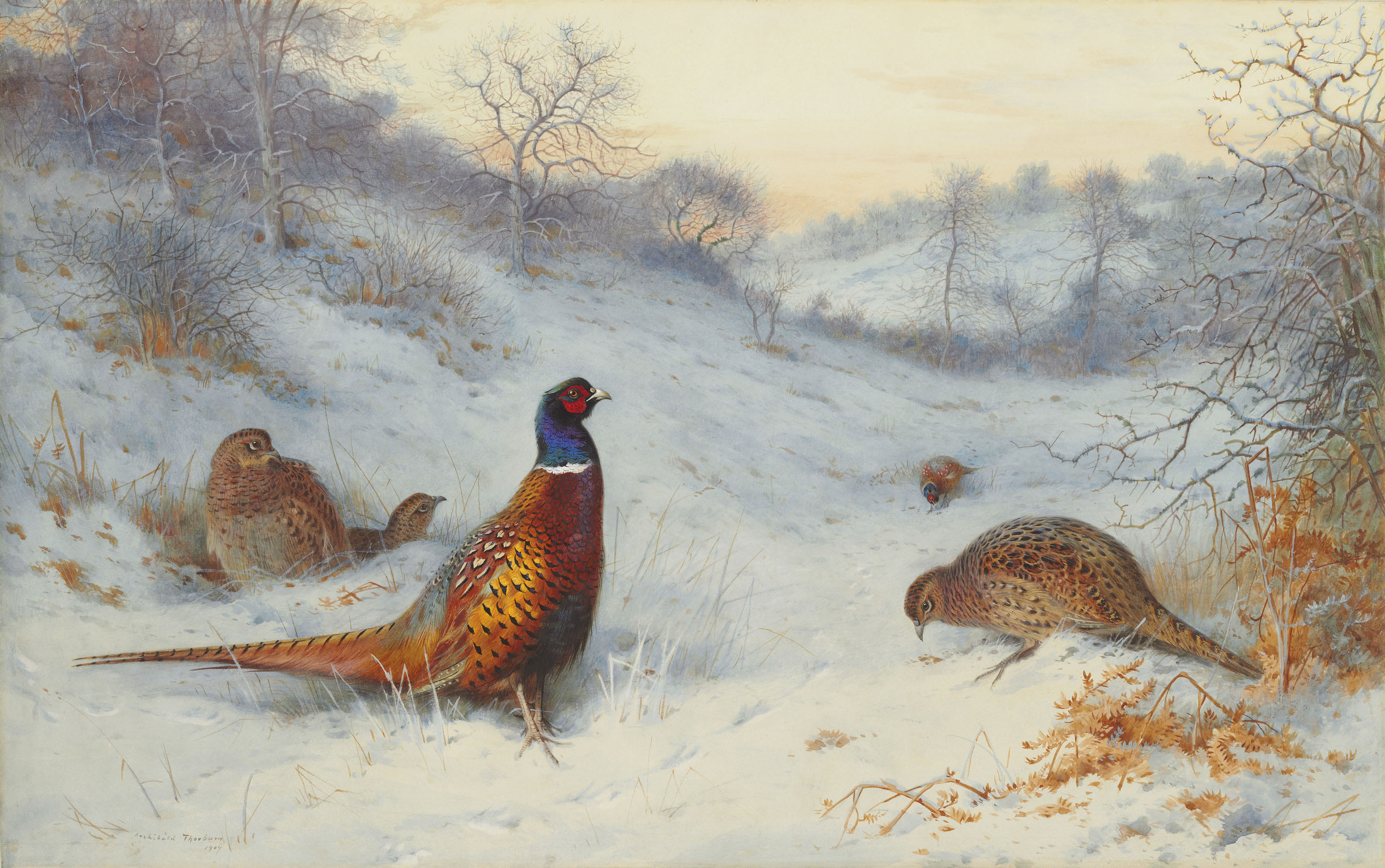 Pheasant in the snow