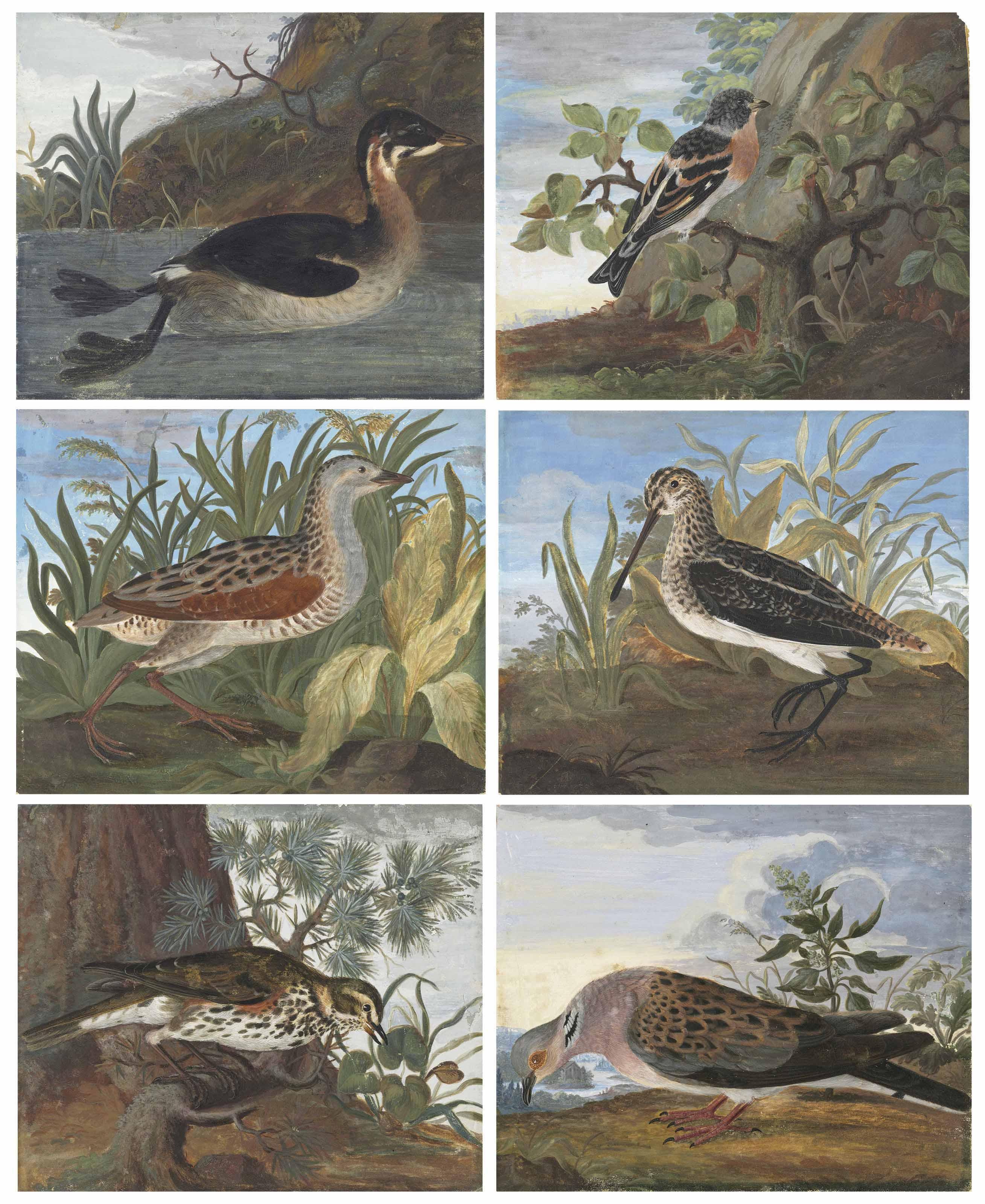 Six birds in landscape settings: A grebe (?) (Podicipitidae); A brambling (Fringilla montifringilla); A corncrake (Crex crex); A snipe (Gallinago gallinago); A redwing (Turdus iliacus); and A turtle dove (Streptopelia turtur)