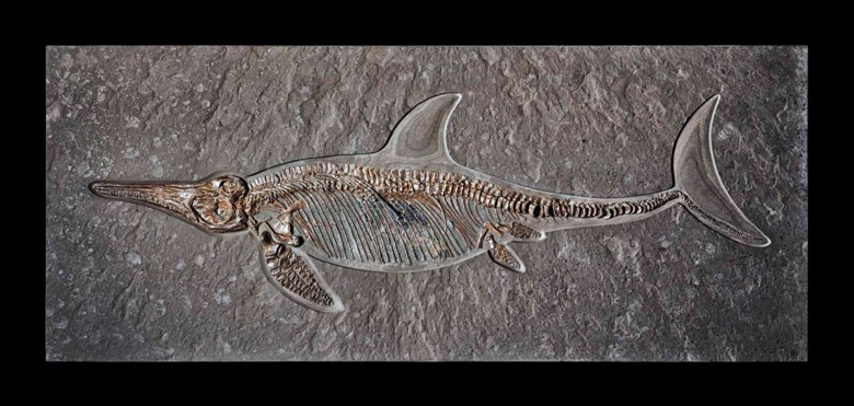 An ichthyosaur with stomach contents, Germany. 31 x 75  in (78.7 x 190.5  cm). Estimate £25,000-35,000. Offered in Science and Natural History on 10 July 2018 at Christie's in London