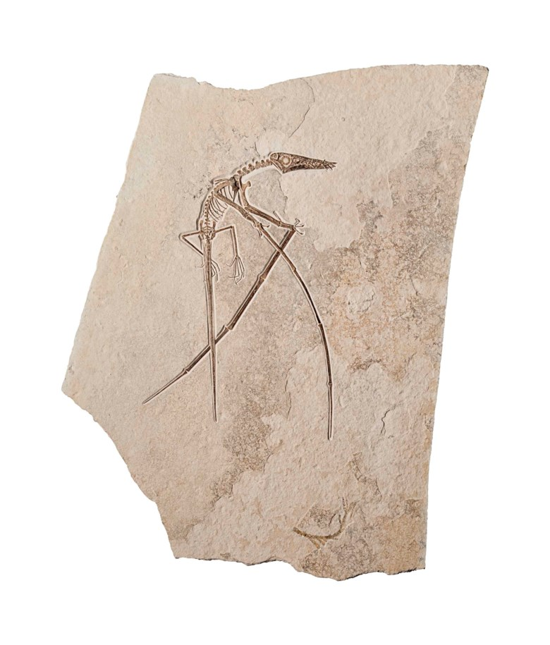 A pterosaur, Solnhofen, Germany. 37 x 26 in (94 cm x 67 cm). Estimate £60,000-90,000. Offered in Science and Natural History on 10 July 2018 at Christie's in London