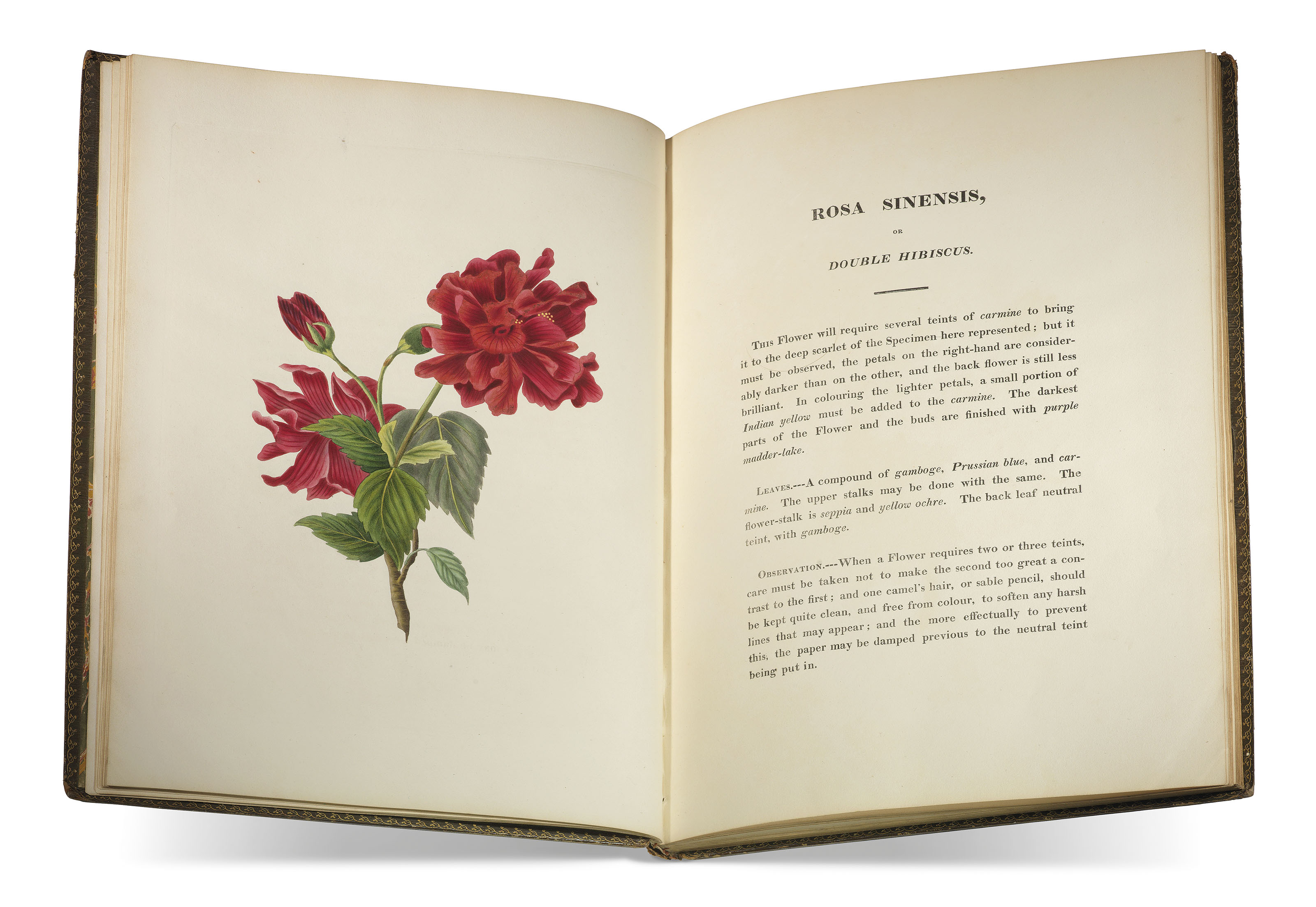 SMITH, Miss.Studies of Flowers from Nature dedicated by permission to... the Princess Elizabeth. Doncaster: Miss Smith, [watermarked 1817-1818].