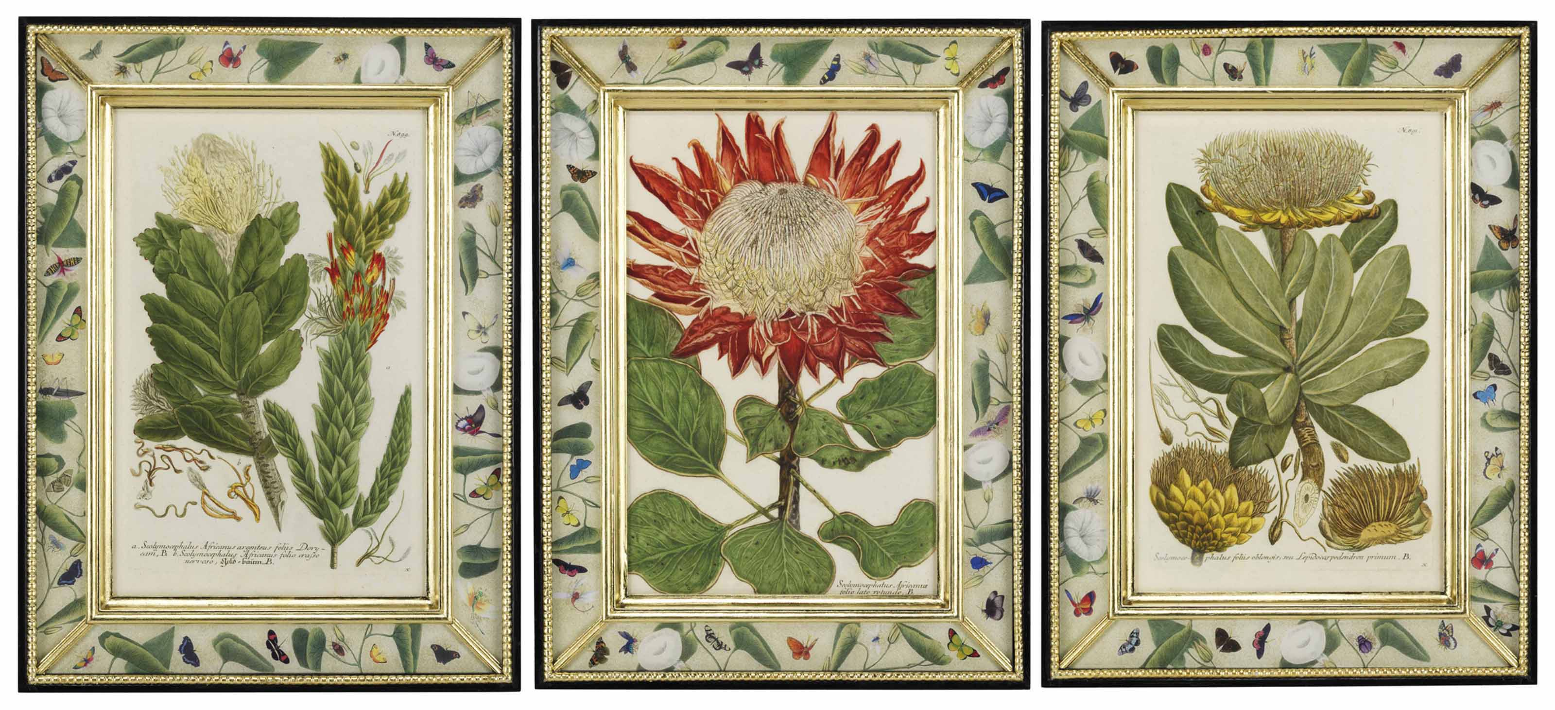 TWELVE HAND-COLOURED BOTANICAL MEZZOTINTS FROM PHYTANTHOZA ICONOGRAPHIA