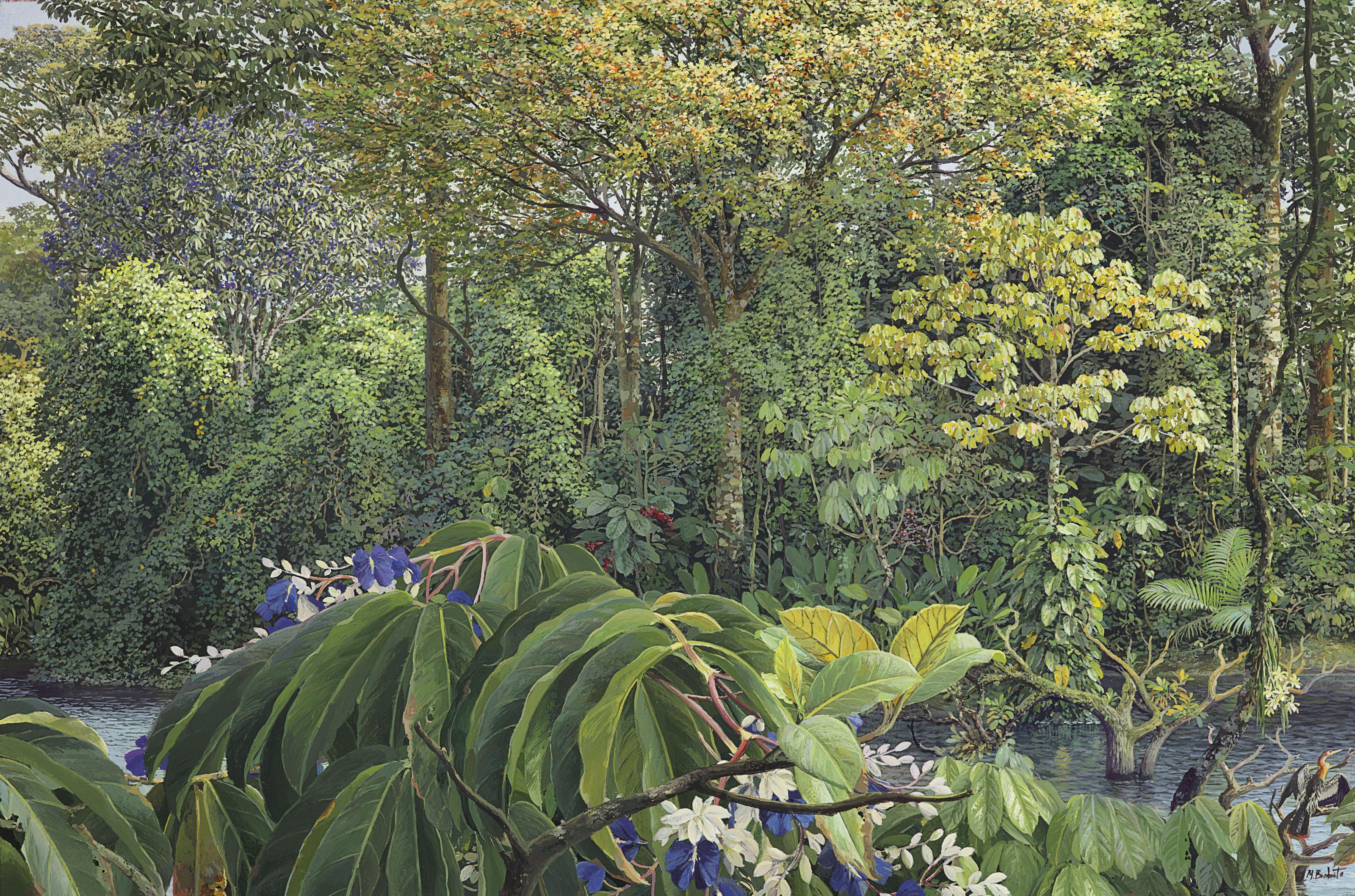 Qualea azul - Qualea ingens Amazônia