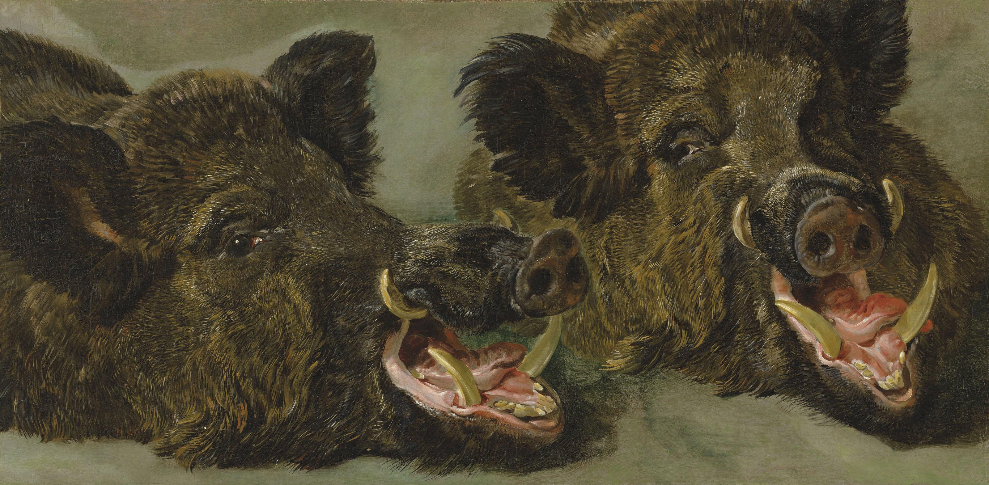 Studies of the head of a wild boar