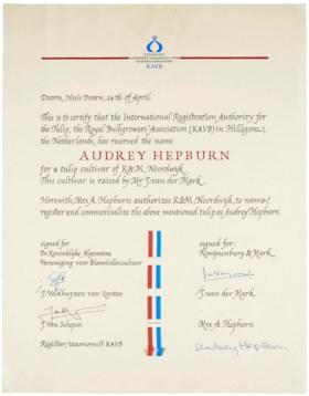 AUDREY HEPBURN TULIP