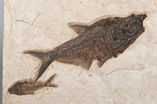A PLAQUE OF SEVEN FOSSIL FISH