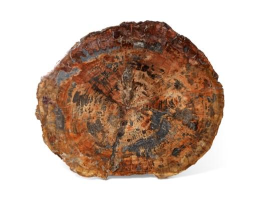 A SLICE OF PETRIFIED WOOD