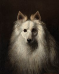 Head of a white dog, possibly a Spitz