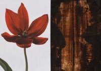 Tulip / The Shape Of Venus