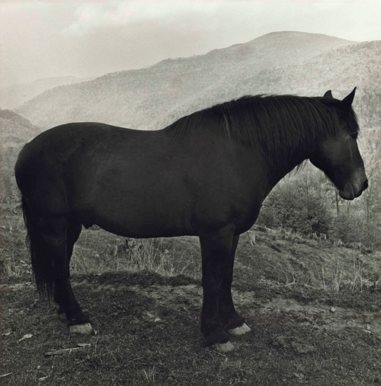 Peter Hujar (1934-1987), Horse in West Virginia Mountains, 1969. Sheet 20 x 24  in (50.8 x 61  cm). Estimate $10,000-15,000. This lot is offered in Photographs on 6 April 2018  at Christie's in New York