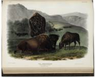 AUDUBON, John James (1785-1851