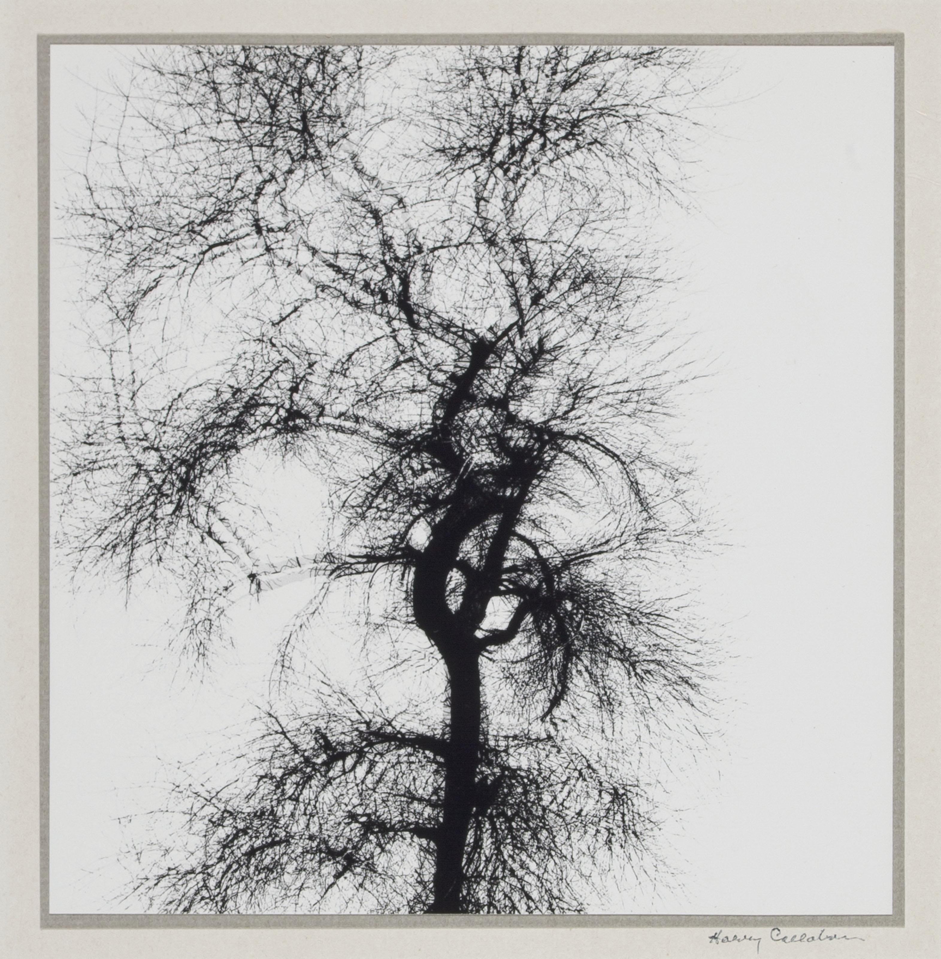 Multiple Exposure Tree, Chicago, 1956