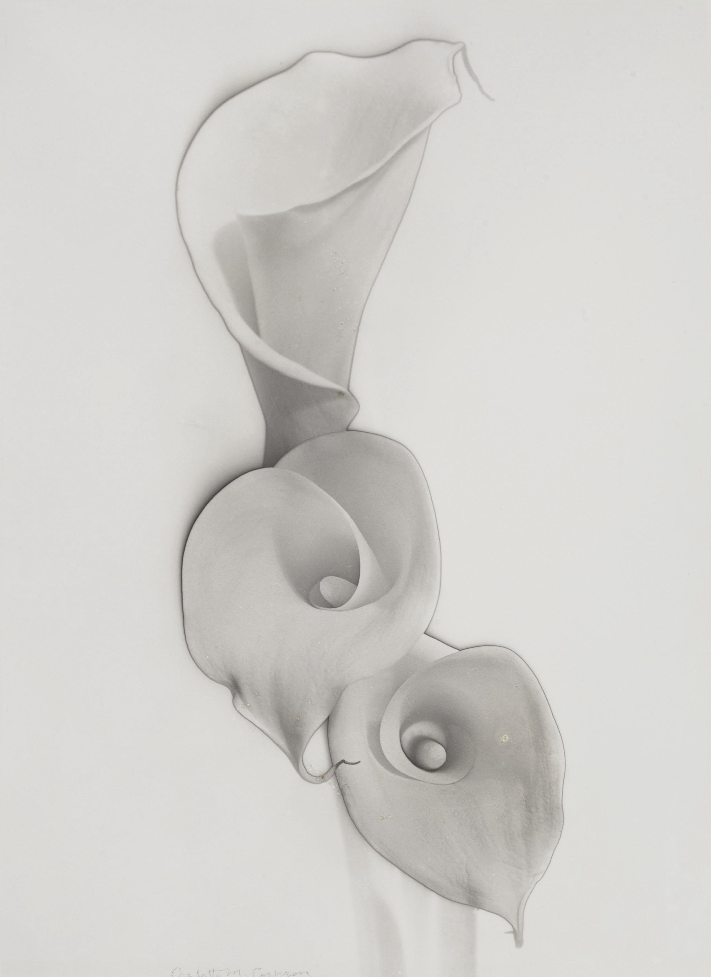 CARLOTTA CORPRON (1901–1988)