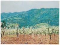 Orchard in the mountains of Saratoga, California