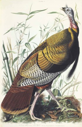 AUDUBON, John James (1785-1851) The Birds of America; from O