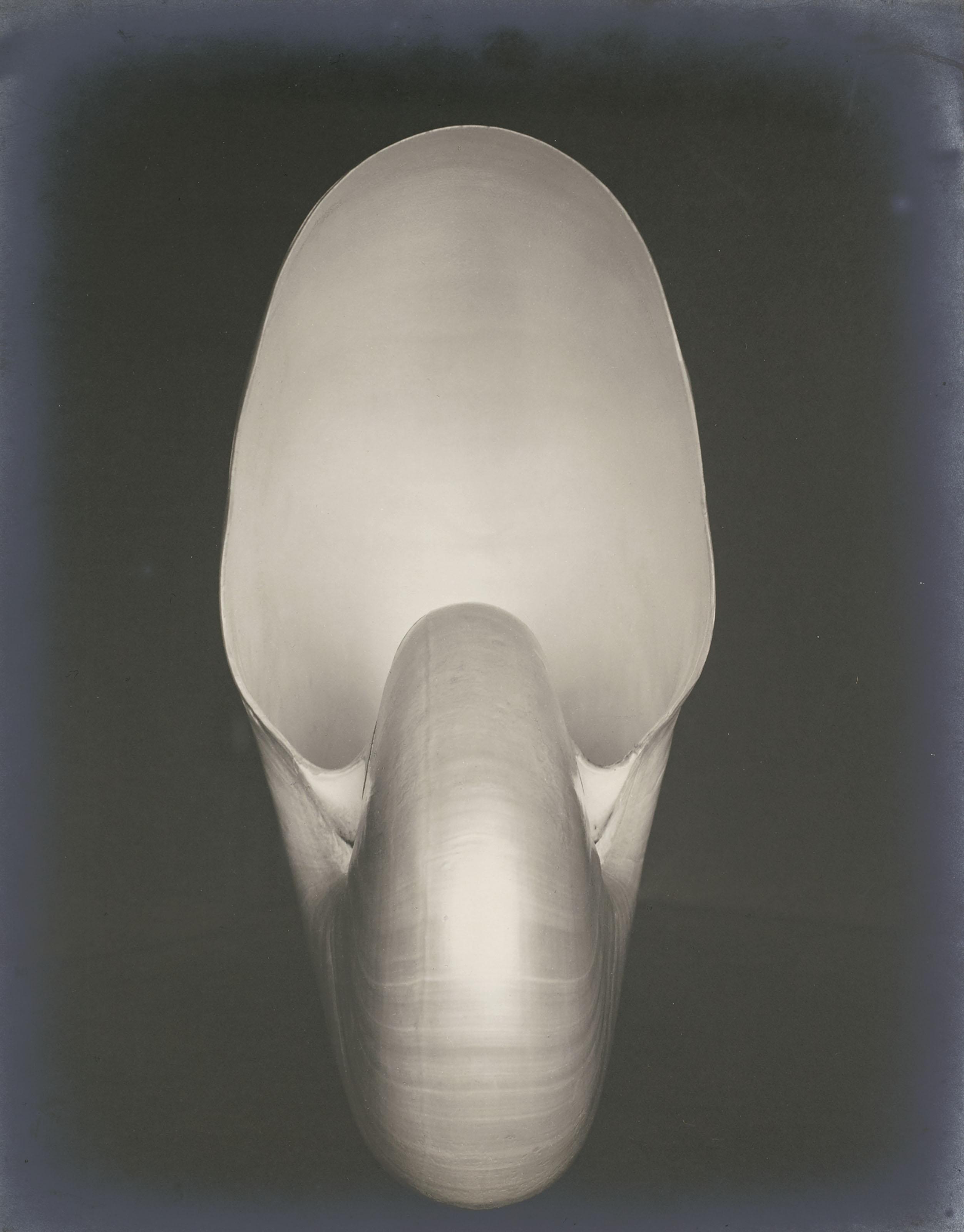 Shell (Nautilus)