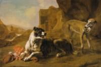 La raison du plus fort: Two dogs fighting over meat
