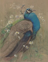 A peacock and marguerites