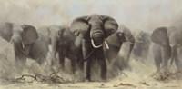 Mostly Elephants