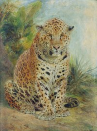 A leopard, seated
