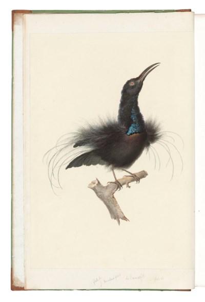 LEVAILLANT, François (1753-1824). Histoire naturelle des Oiseaux de Paradis...