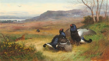 Archibald Thorburn (1860-1935), Blackcock Displaying at the Lek, 1901. Pencil, watercolour and bodycolour, heightened with gum arabic on paper. 18¾ x 31  in (47.6 x 78.8  cm). Estimate £50,000-80,000. Offered in IN THE FIELD — An Important Private Collection of Sporting Art on 12 December 2019 at Christie's in London