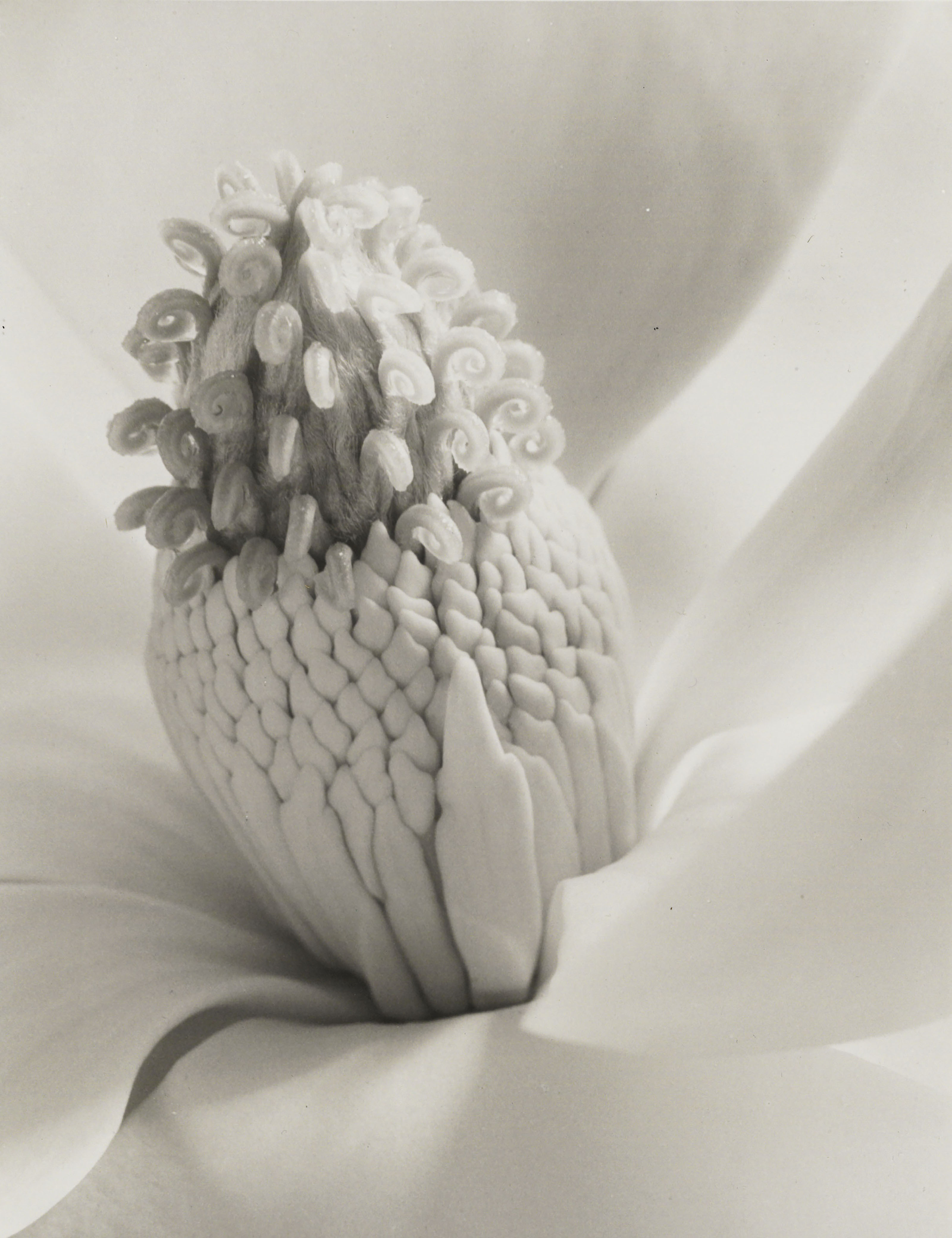 Magnolia Blossom (Tower of Jewels), 1925