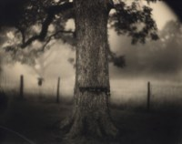 Untitled (Deep South #1, Scarred Tree), 1998