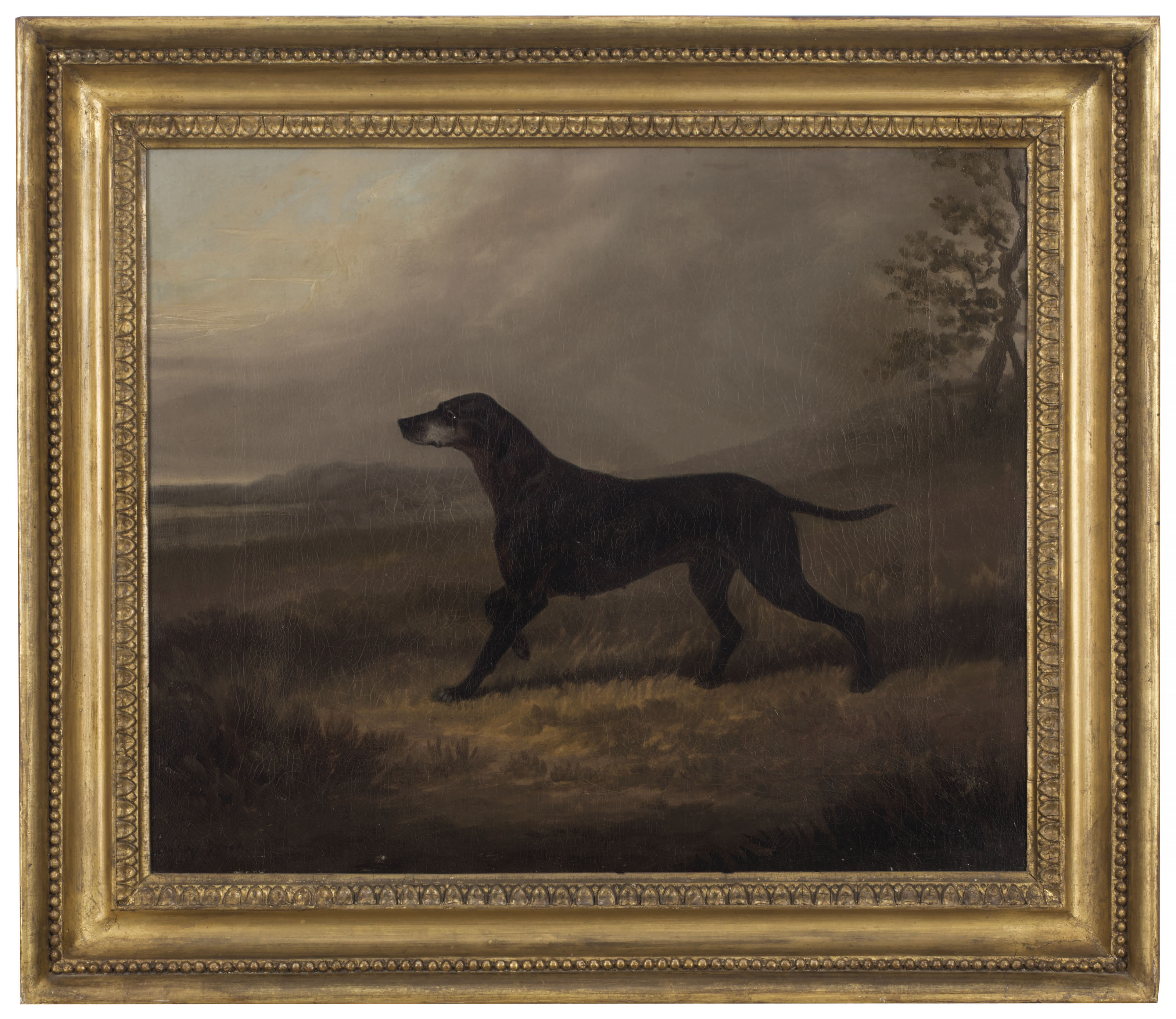 Tippoo, a pointer in a landscape
