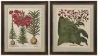 Lilium album; together with Tabacum latifolium