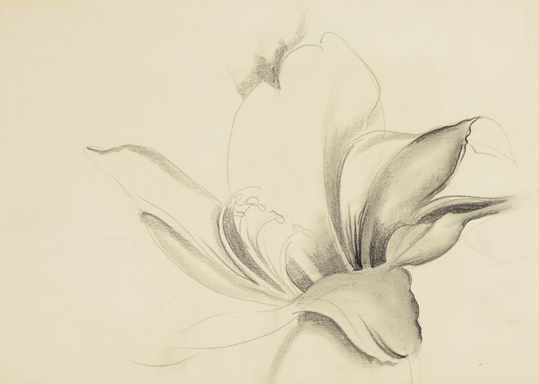 Georgia O'Keeffe (1887-1986), Untitled (Lily), executed circa 1930-36. Pencil on paper. 10½ x 15  in (26.7 x 38.1  cm). Estimate $30,000-50,000. This lot is offered in American Art on 22 May 2019 at Christie's in New York
