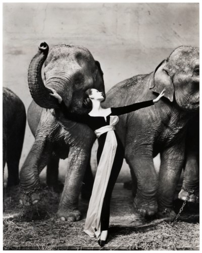 RICHARD AVEDON (1923–2004)