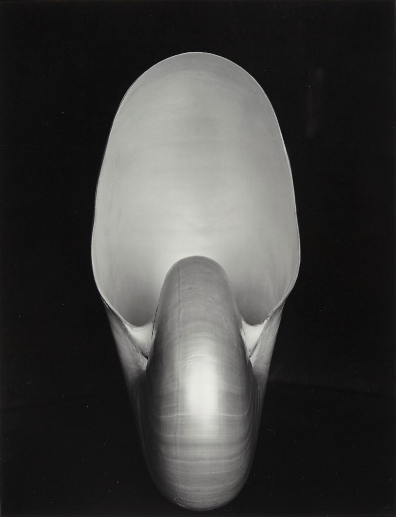 Edward Weston (1886–1958), Shell, 1927. Gelatin silver print, mounted on board, printed later by Cole Weston. Mount 15⅛ x 13½  in (38 x 33.5  cm). Estimate $6,000-8,000. This lot is offered in Daydreaming Photographs from the Goldstein Collection on 2 April 2019 at Christie's in New York