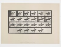 Horse and Rider from Animal Locomotion, Plate 625, 1887