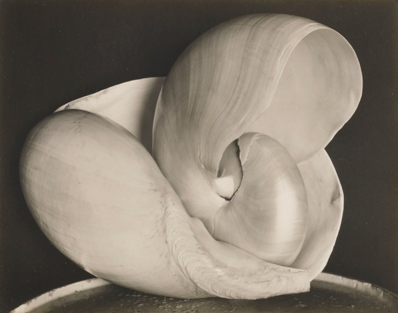 Edward Weston (1886–1958), Shells 6S, 1927. Mount 8 x 9¾  in (20.3 x 24.8  cm). Estimate $300,000-500,000. This lot is offered in The Face of the Century Photographs from a Private Collection on 2 April 2019 at Christie's in New York